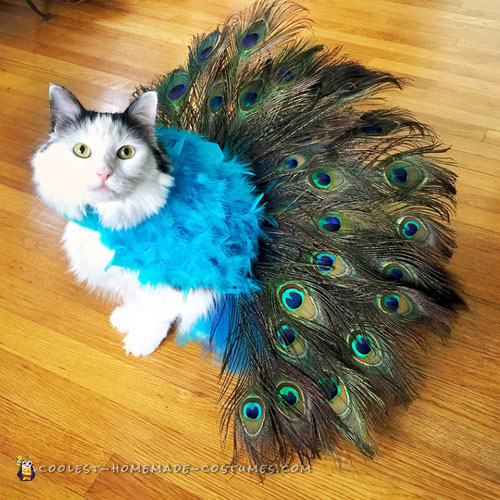 Pretty Peacock Cat Costume – Literally Tells It's Own Tail!