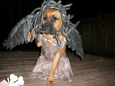 Ideas For Homemade Halloween Costumes For Dogs Halloween Costume Idea