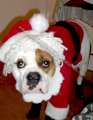 Homemade Santa Clause Dog Costume
