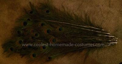 Homemade Peacock Costume Idea